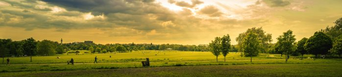 agriculture-beautiful-view-city-park-1080722.jpg
